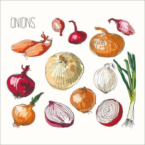 Selvklæbende plakat Onions collage
