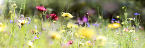 Premium-plakat Panorama of a wildflower meadow