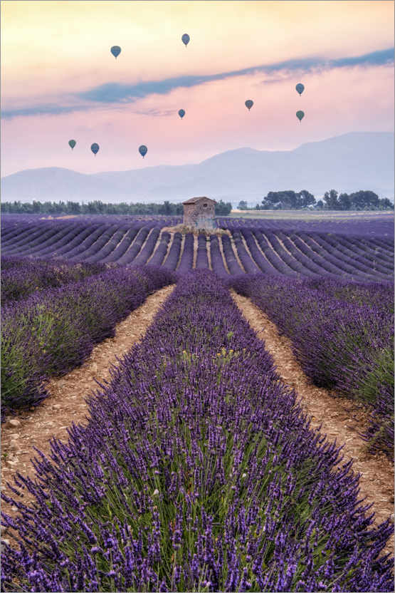 Premium-plakat Balloonist over the sea of flowers