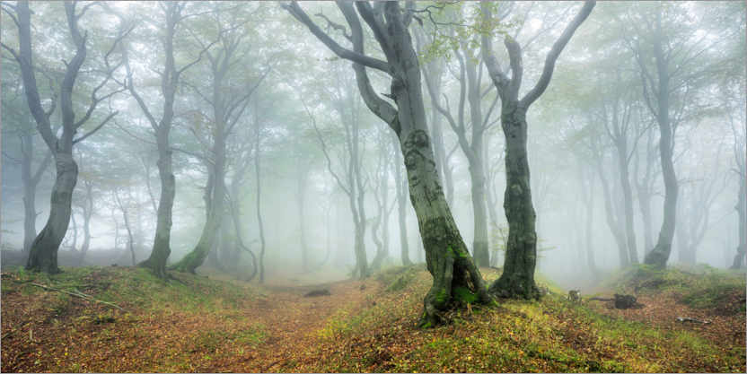 Premium-plakat Mysterious forest in the fog