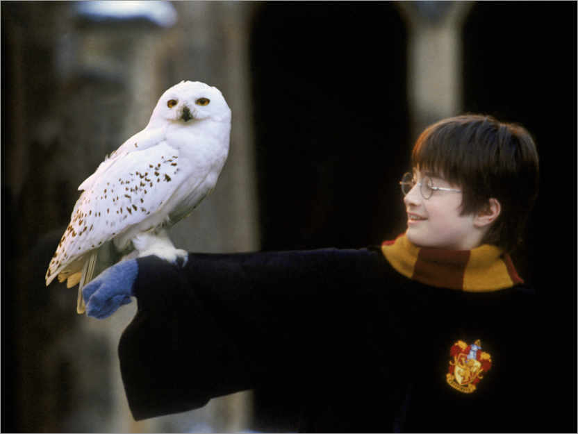 Premium-plakat Harry Potter and the Sorcerer's Stone - Harry & Hedwig