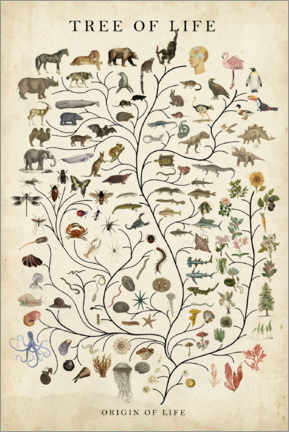 Selvklæbende plakat  Tree of Life - Studio W