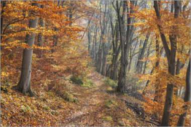 Lærredsbillede  Forest path in late autumn - The Wandering Soul