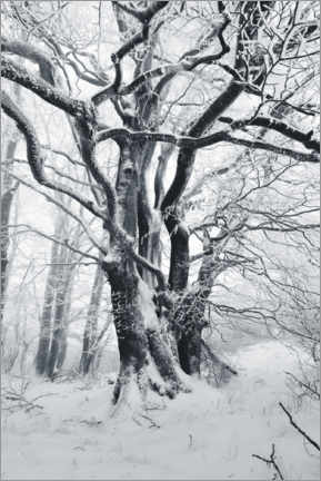 Lærredsbillede  Mystic tree in frost and snow - The Wandering Soul