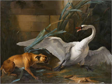 Print på skumplade  Swan attacked by a dog - Jean-Baptiste Oudry