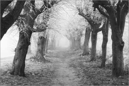 Galleritryk  Linden avenue in the fog on a winter morning - The Wandering Soul