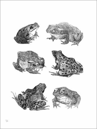 Akrylbillede  Six frogs and toads - Theo van Hoytema