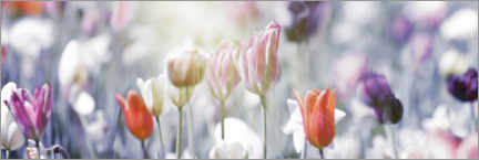 Premium-plakat Tulips in pastel colors
