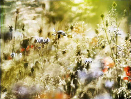 Premium-plakat Magical wildflower meadow