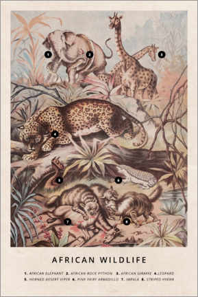 Akrylbillede  African wildlife (vintage) - Wunderkammer Collection