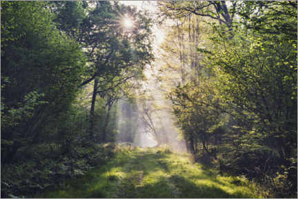 Galleritryk  Forest path with rays of light at sunrise - The Wandering Soul