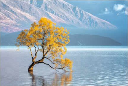 Lærredsbillede  Wanaka tree in the morning light - André Wandrei