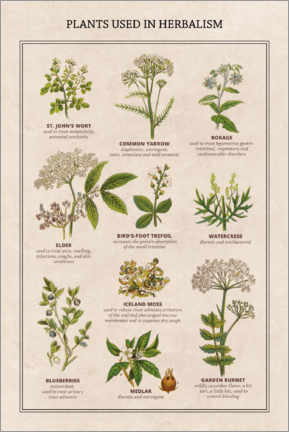 Akrylbillede  Medicinal plants (English) - Wunderkammer Collection