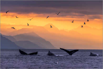 Premium-plakat Humpback whale at sunset with the Chilkat Mountains