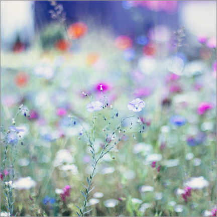 Akrylbillede  Colorful flower meadow in summer - Nadja Jacke
