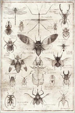 Premium-plakat  Insects - Mike Koubou
