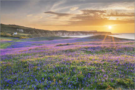 Lærredsbillede  Sea of flowers on the coast of Ireland at sunset - The Wandering Soul