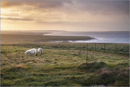 Lærredsbillede  Sheeps by the sea at sunset in Scotland - The Wandering Soul