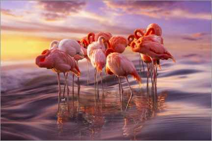 Galleritryk  Flamingo siesta - Adrian Borda