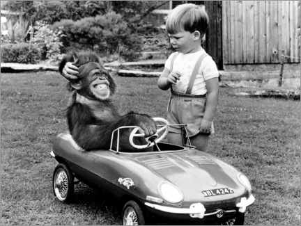 Premium-plakat Monkey sits in a child's car
