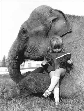 Lærredsbillede  Girl sits on elephant and reads - John Drysdale