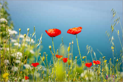 Premium-plakat Poppies meadow by the lake