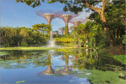 Premium-plakat  Supertrees in the morning, Singapore - Markus Lange