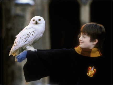 Akrylbillede  Harry Potter and the Sorcerer's Stone - Harry & Hedwig