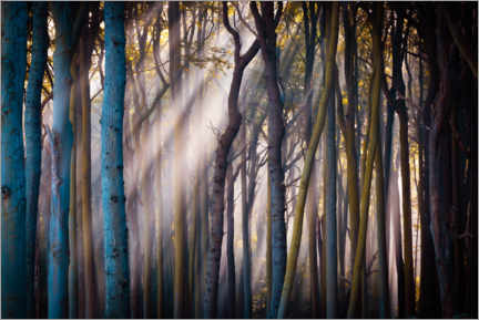 Premium-plakat Forest in the morning