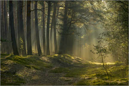 Premium-plakat In the morning in the forest
