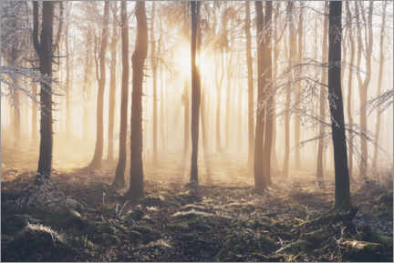 Premium-plakat Morning light incidence in frost and fog in the beech forest