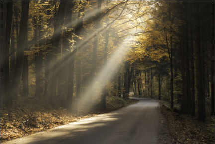 Premium-plakat Rays of light in the autumn forest