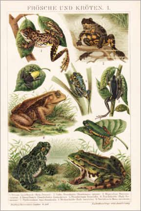 Akrylbillede  Frogs and toads