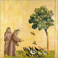 Print på træ  St. Francis of Assisi preaching to the birds - Giotto di Bondone