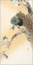 Selvklæbende plakat  Peacock in a cherry tree - Ohara Koson