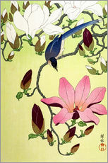 Galleritryk  Magpie with Pink and White Magnolia Blossoms - Ohara Koson