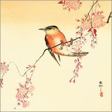 Galleritryk  Red Bird and Cherry Blossoms - Ohara Koson