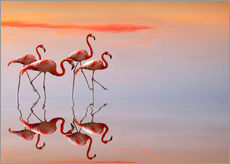 Galleritryk  Flamingos in the mirror - Anna Cseresnjes