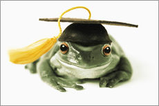 Galleritryk  Frog with completion hood - Darwin Wiggett