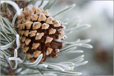 Selvklæbende plakat  Pine cone in the winter - Charles Tribbey