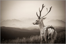 Galleritryk  Stag in the mountains