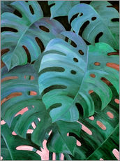 Selvklæbende plakat  Monstera Love in Teal and Emerald Green - Micklyn Le Feuvre