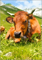 Galleritryk  Cow with bell on mountain pasture