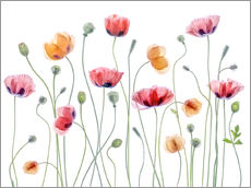 Galleritryk  Papaver Party - Mandy Disher