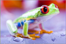 Galleritryk  colorful frog