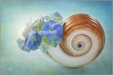 Galleritryk  Blue flowers in a snail shell - Elena Schweitzer