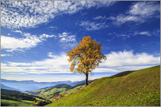 Galleritryk  Isolated tree in autumn, Funes Valley, South Tyrol, Italy - Roberto Sysa Moiola