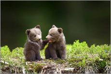 Galleritryk  Two young brown bears
