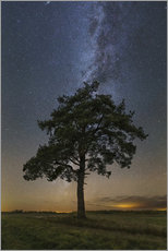 Selvklæbende plakat Lonely tree under the Milky Way