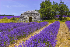 Akrylbillede  Stone hut in the lavender field - Jürgen Feuerer